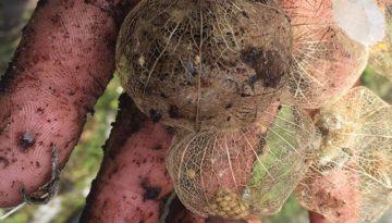 feb-26--seeds