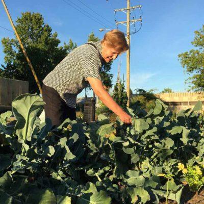 garden-picking-1-900