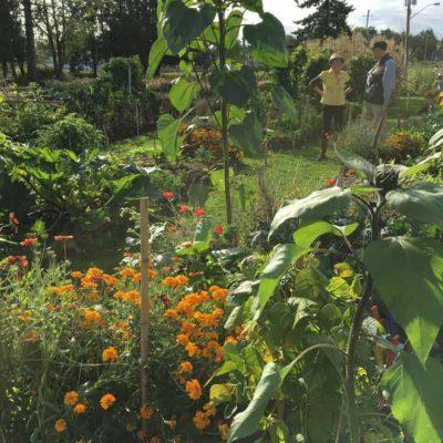 garden.lush_