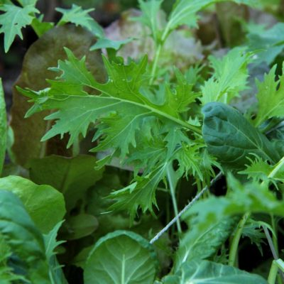 lettuce.green_
