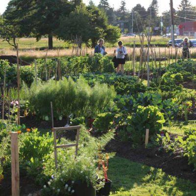 lsolstice-garden