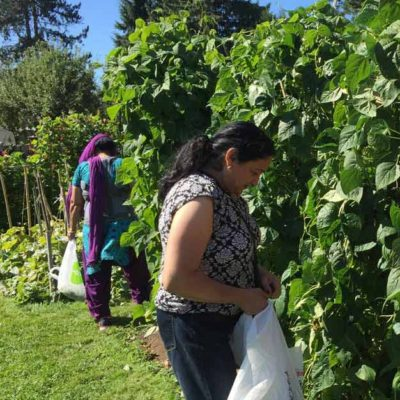 picking-beans