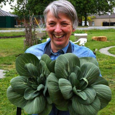 picking-bokchoy