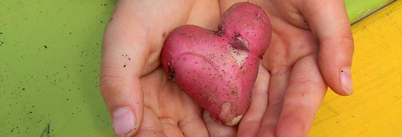 potato-1170
