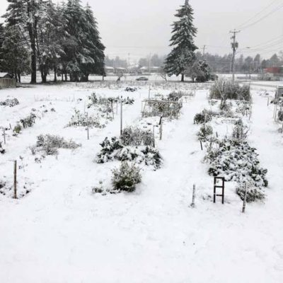 snow1a-1000