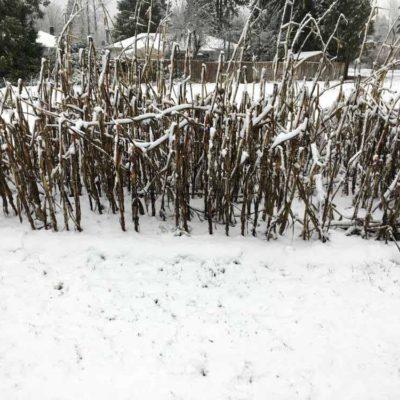 snow2a-1000