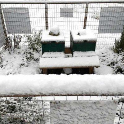 snow4a-1000