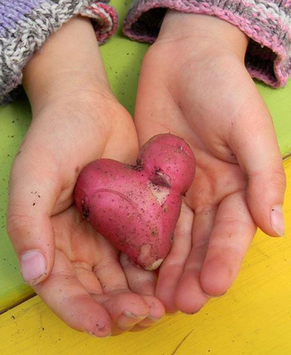 potato-heart-576-703