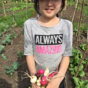 radishes-2-crop