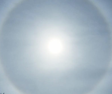 sunbow-crop