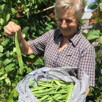 beans-picking-1000