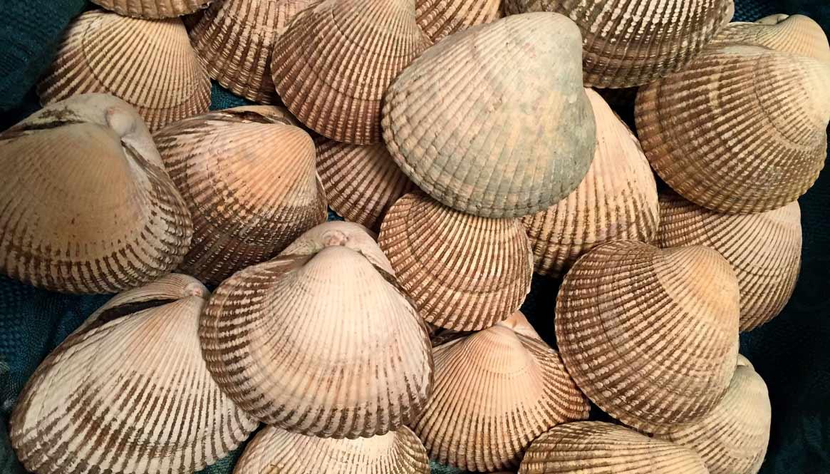 shell1-1165-665