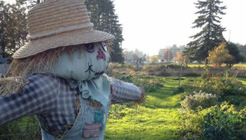 scarecrow-1165-665