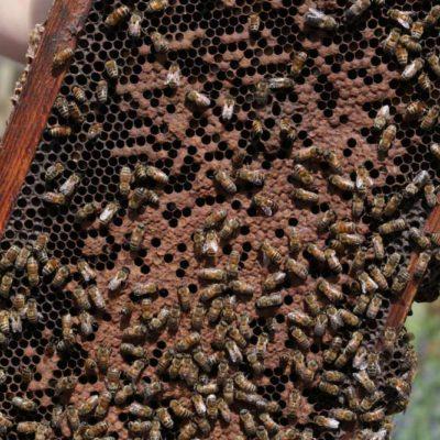 HoneyBeeCentre-28-