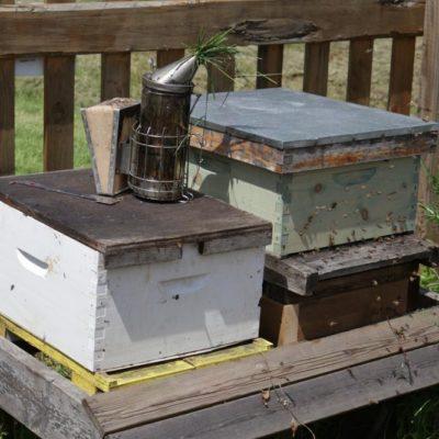 HoneyBeeCentre-4-