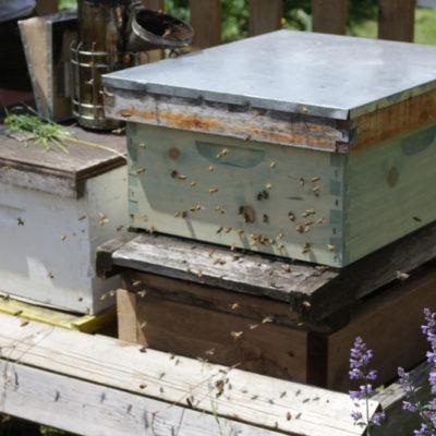 HoneyBeeCentre-8-