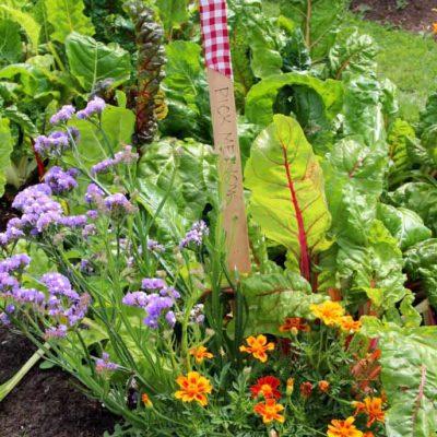 pickGarden-flowers-July-31